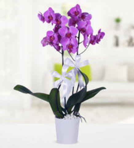 mor orkidem 8