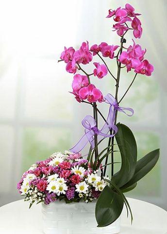 mor orkidem 1